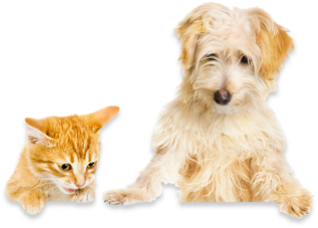 Give Your Family Pets the Security of a Pet Insurance